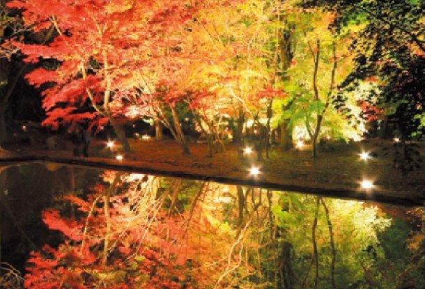 お出かけレポート曽木公園-紅葉